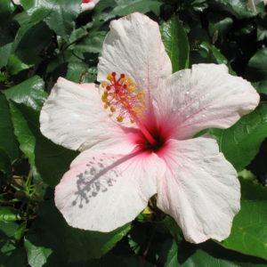 Apple_0020_Blossom