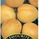 Apricot_0020_trevatt