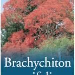 Brachychiton_0020_acerifolius