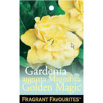 Gardenia_0020_golden_0020_magic_m