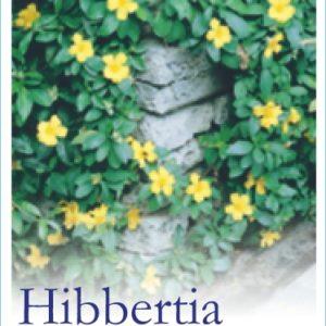Hibbertia_Scandens