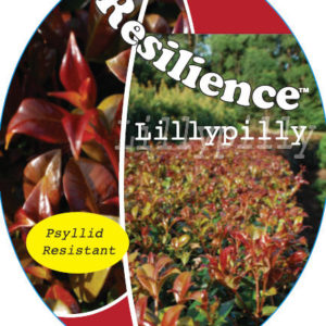 Syzygium_0020_resilience