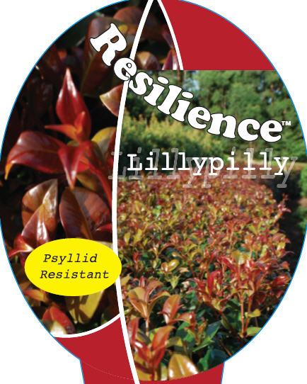 Syzygium_0020_resilience1