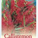 callistemon_0020_dawson_0020_river