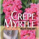 crepe myrtle
