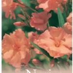 nerium_0020_mrs_0020_roeding