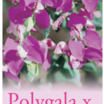 polygala