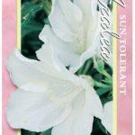 azalea magnifica
