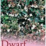 dwarf abelia