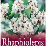 rhaphiolepsis indica alba