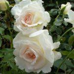 Brindabella Bouquet