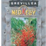 Grevillea Ned Kelly