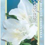 azalea fielders white
