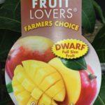 Mango Semi Dwarf Palmer