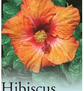 hibiscus hot pepper
