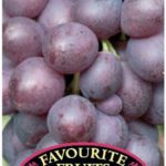 Grape Flame Seedless