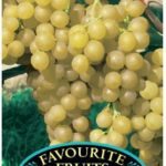 Grape Vine Sultana