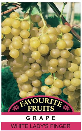 Grape Lady S Finger 4 L Pot Dawsons Garden World
