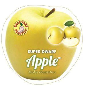 Apple Super Dwarf Dorset Gold 6Ltr Pot