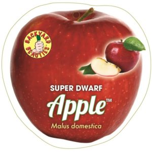 Apple Super Dwarf Sundowner 6Ltr Pot