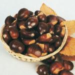 Chestnut Prolific