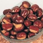 Chestnut Seedling