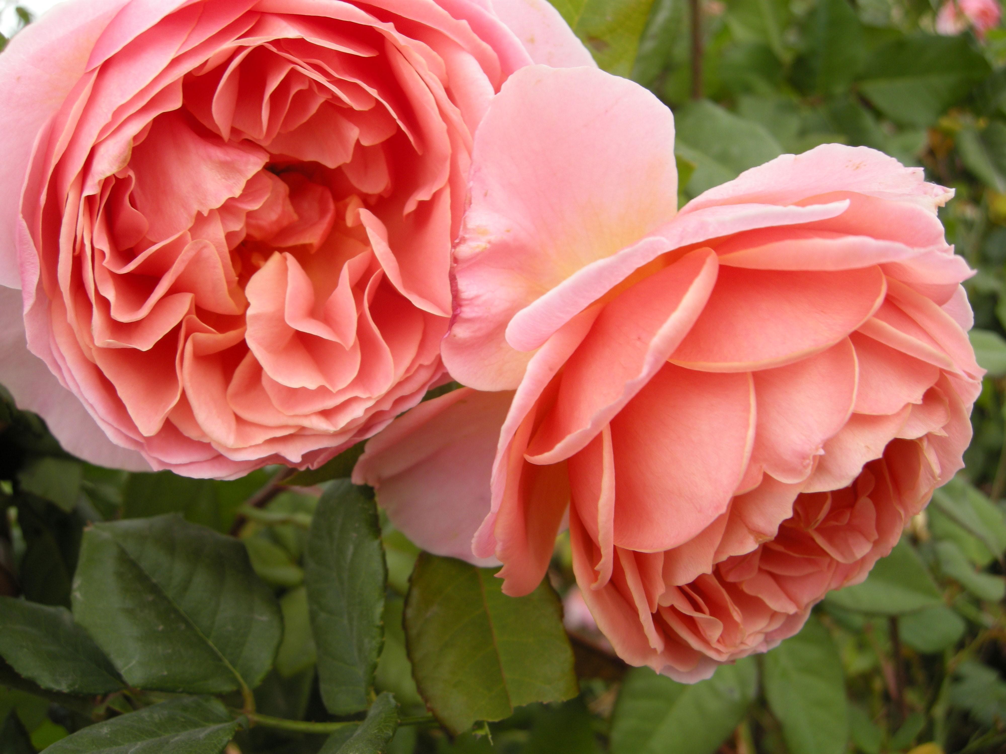 Phoenix Rose nude 724