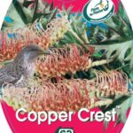 grevillea copper crest