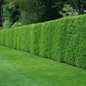 Hedging Collection