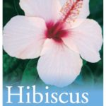 Hibiscus Winter Show