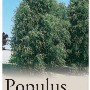 Populus Simonii Fastigiata