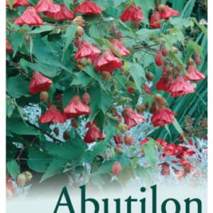 Abutilon Red Emperor