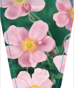 Japanese anemone single pink common name japanese anemonewind anemone single pink mightylinksfo