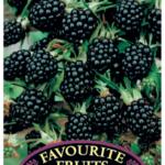 Blackberry thornless