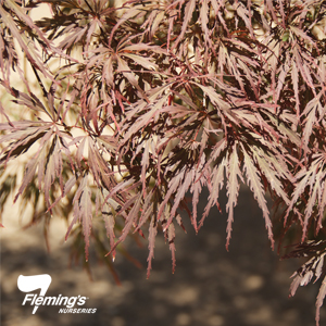 Acer Crimsonwave