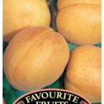 Apricot Moorpark