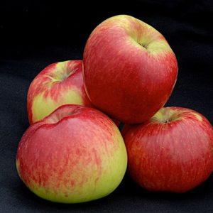 Apple Monty's Surprise..