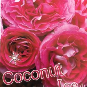 Floribunda Coconut Ice