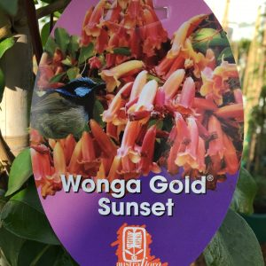 PANDOREA WONGA GOLD SUNSET
